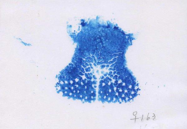 經產鼻紋 - 耳號163