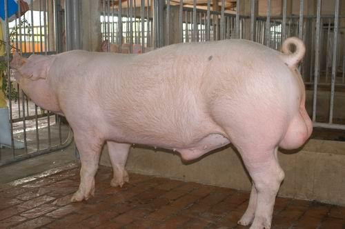 中央畜產會200507期L0759-01體型-全身相片