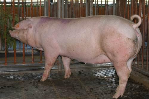 中央畜產會200507期L1686-10體型-全身相片