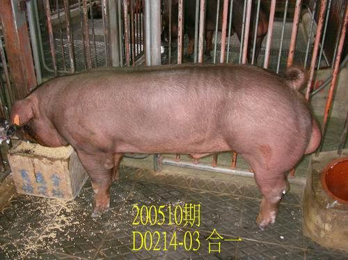 中央畜產會200510期D0214-03拍賣相片