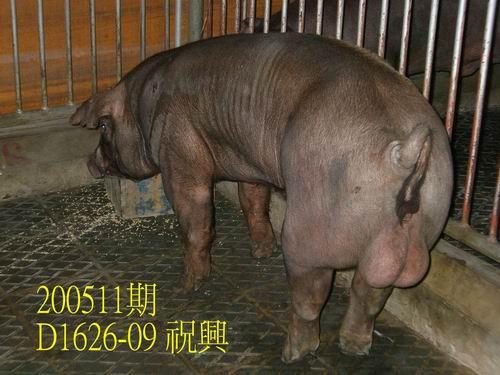 中央畜產會200511期D1626-09拍賣相片