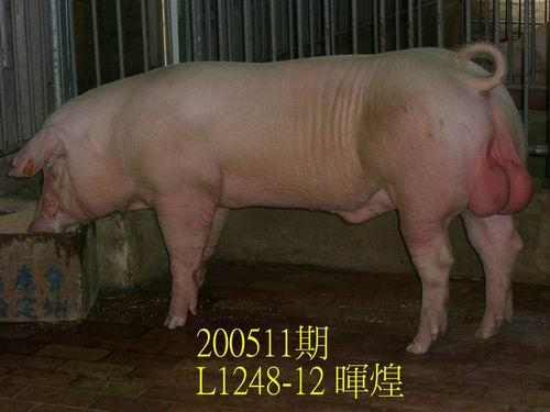 中央畜產會200511期L0528-02拍賣相片