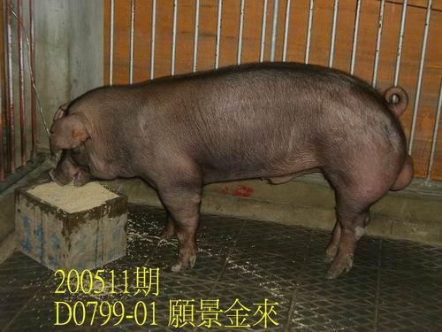 中央畜產會200511期D0799-01拍賣相片