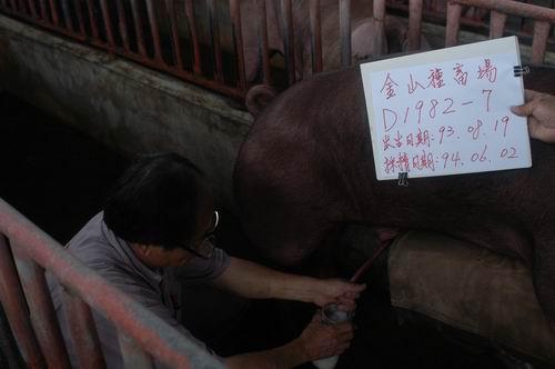 台灣種豬發展協會9404期D1982-07採精相片