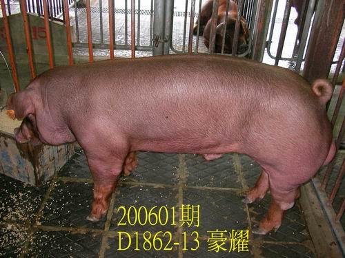 中央畜產會200601期D1862-13拍賣相片