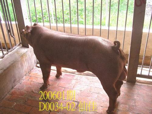 中央畜產會200601期D0034-02拍賣相片