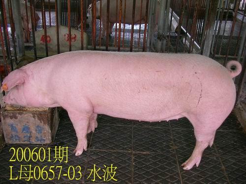 中央畜產會200601期L0657-03拍賣相片