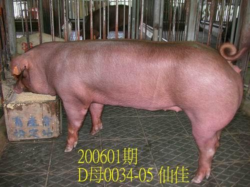 中央畜產會200601期D0034-05拍賣相片