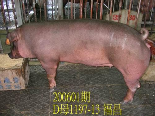 中央畜產會200601期D1197-13拍賣相片