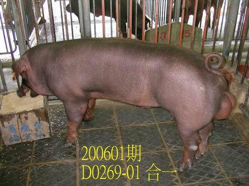 中央畜產會200601期D0269-01拍賣相片