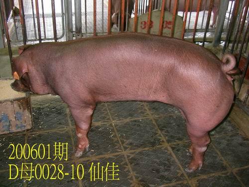 中央畜產會200601期D0028-10拍賣相片