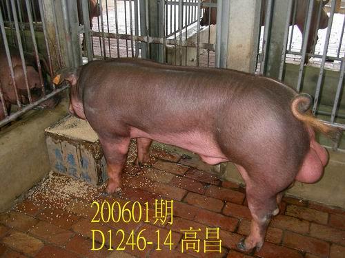 中央畜產會200601期D1246-14拍賣相片