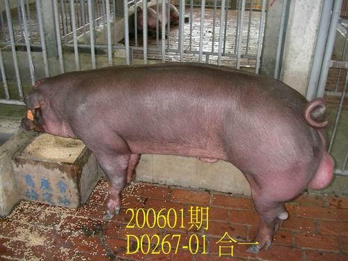 中央畜產會200601期D0267-01拍賣相片