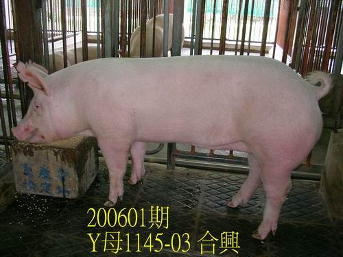 中央畜產會200601期Y1145-03拍賣相片
