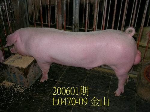中央畜產會200601期L0470-09拍賣相片