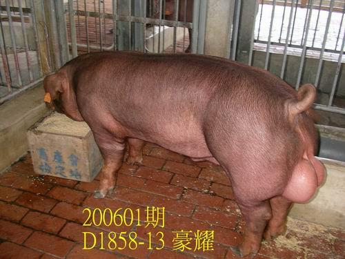 中央畜產會200601期D1858-13拍賣相片