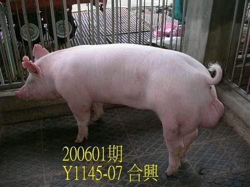 中央畜產會200601期Y1145-07拍賣相片