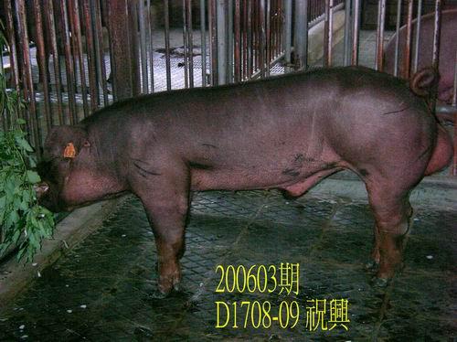 中央畜產會200603期D1708-09拍賣相片