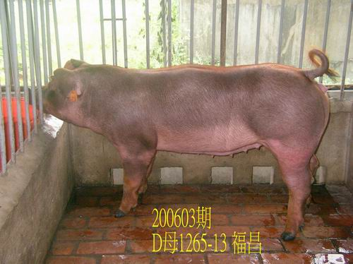 中央畜產會200603期D1265-13拍賣相片