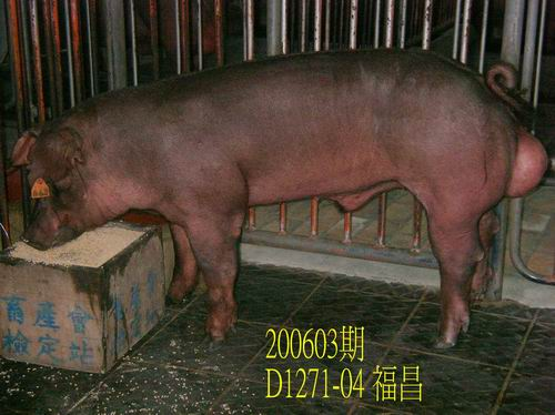 中央畜產會200603期D1271-04拍賣相片