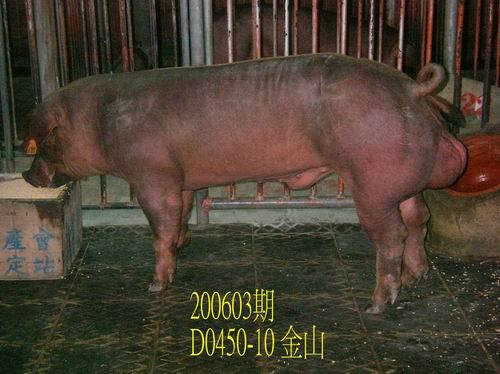 中央畜產會200603期D0450-10拍賣相片