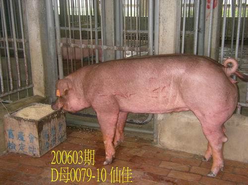中央畜產會200603期D0079-10拍賣相片