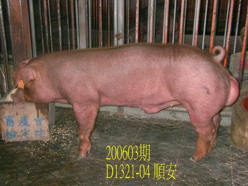 中央畜產會200603期D1321-04拍賣相片