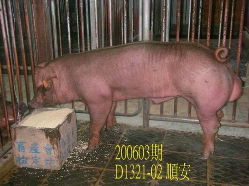 中央畜產會200603期D1321-02拍賣相片