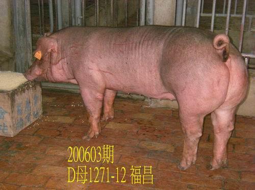 中央畜產會200603期D1271-12拍賣相片