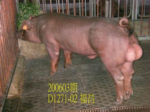 中央畜產會200603期D1271-02拍賣相片