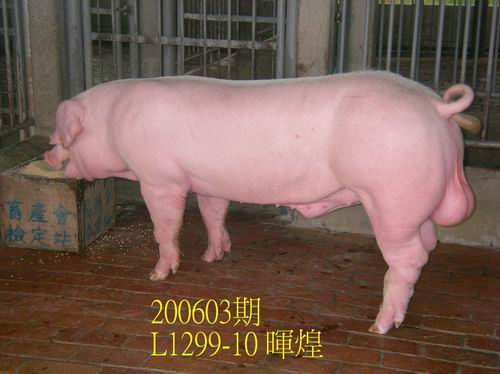 中央畜產會200603期L1299-10拍賣相片
