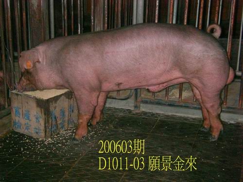 中央畜產會200603期D1011-03拍賣相片