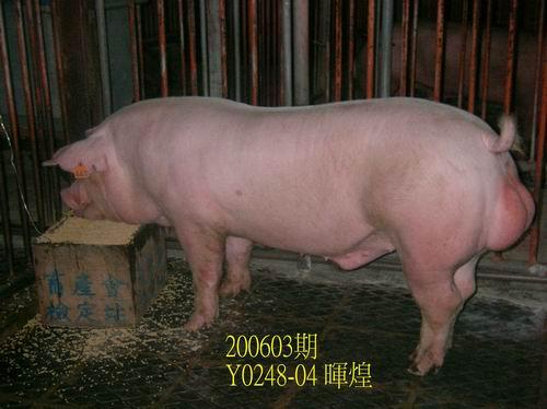 中央畜產會200603期Y0248-04拍賣相片