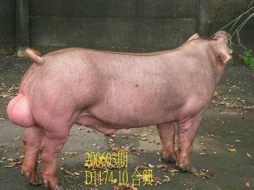 中央畜產會200603期D1174-10拍賣相片