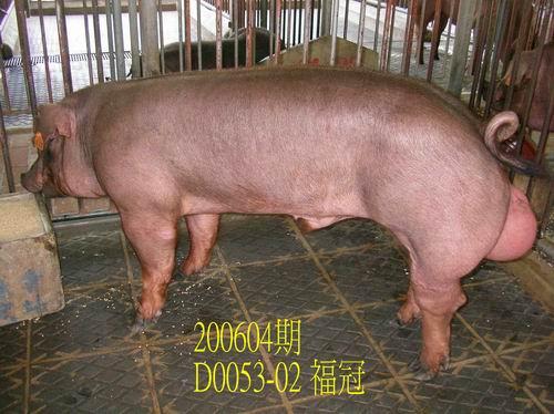 中央畜產會200604期D0053-02拍賣相片
