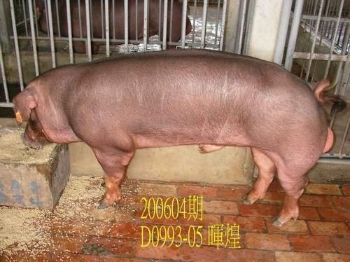 中央畜產會200604期D0993-05拍賣相片