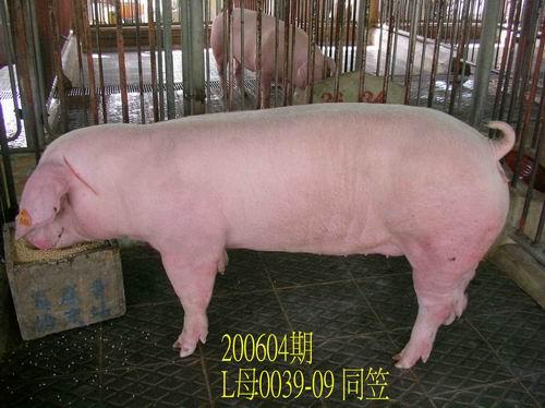 中央畜產會200604期L0039-09拍賣相片
