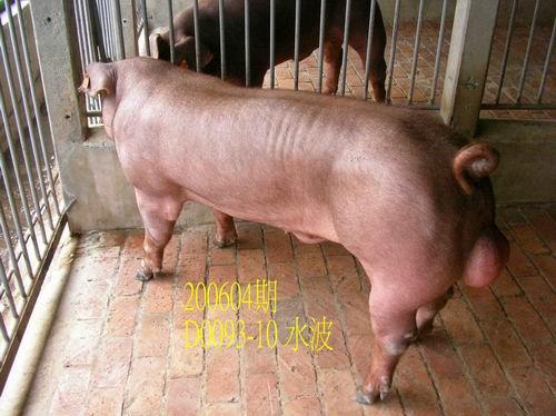 中央畜產會200604期D0093-10拍賣相片