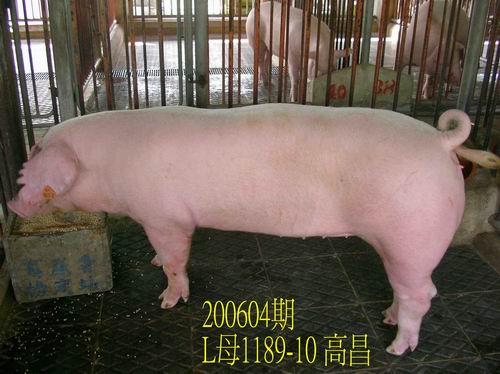 中央畜產會200604期L1189-10拍賣相片