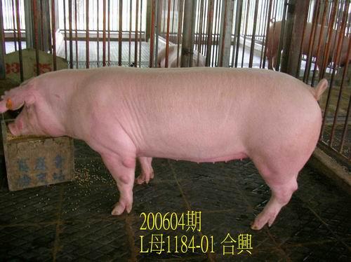中央畜產會200604期L1184-01拍賣相片