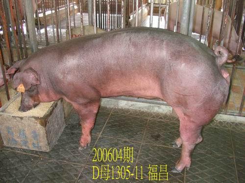 中央畜產會200604期D1305-11拍賣相片