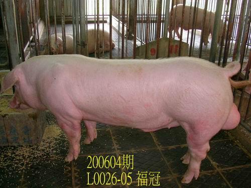 中央畜產會200604期L0026-05拍賣相片