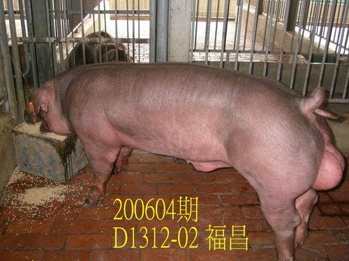 中央畜產會200604期D1312-02拍賣相片