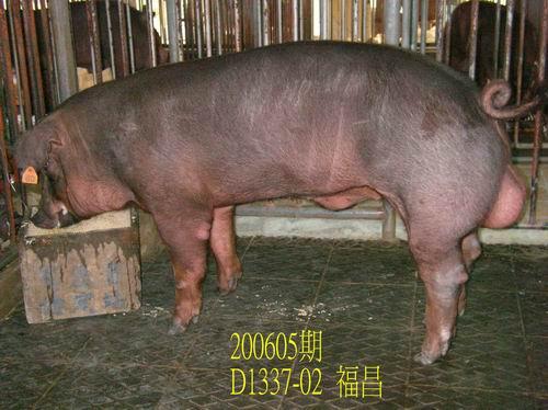 中央畜產會200605期D1337-02拍賣相片