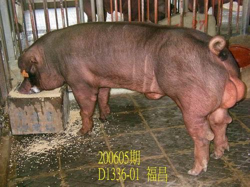 中央畜產會200605期D1336-01拍賣相片