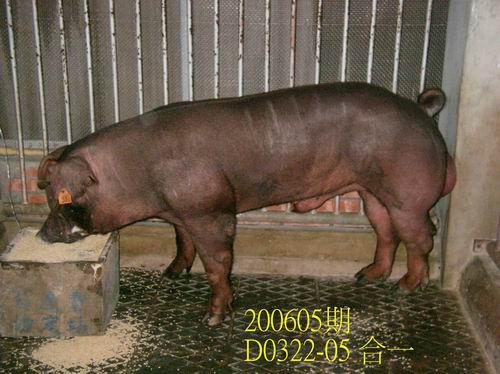 中央畜產會200605期D0322-05拍賣相片