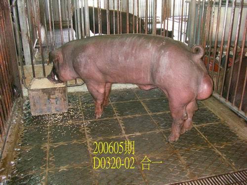 中央畜產會200605期D0320-02拍賣相片