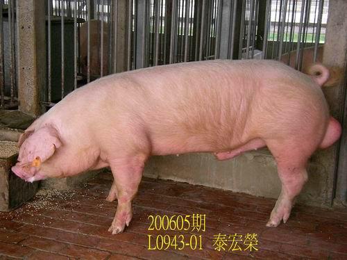 中央畜產會200605期L0943-01拍賣相片