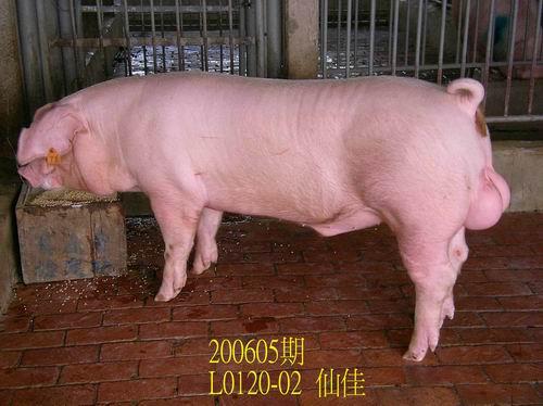 中央畜產會200605期L0120-02拍賣相片