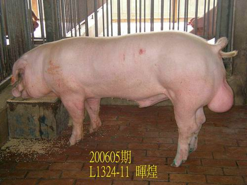 中央畜產會200605期L1324-11拍賣相片